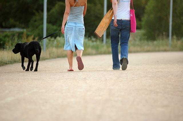 pareja paseando perro psicologia